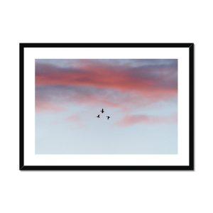 Buy Bird Pictures